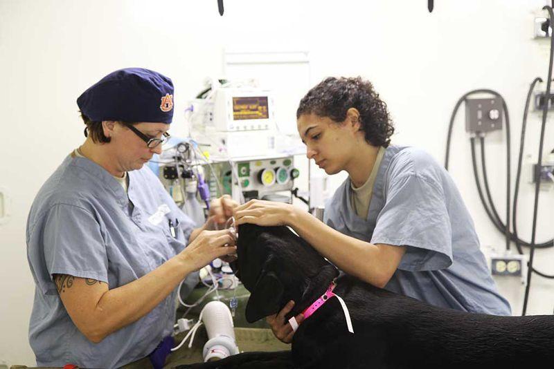 ¿Por qué los veterinarios se suicidan tanto?