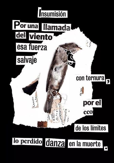 Alberto Muñoz, poesía visual