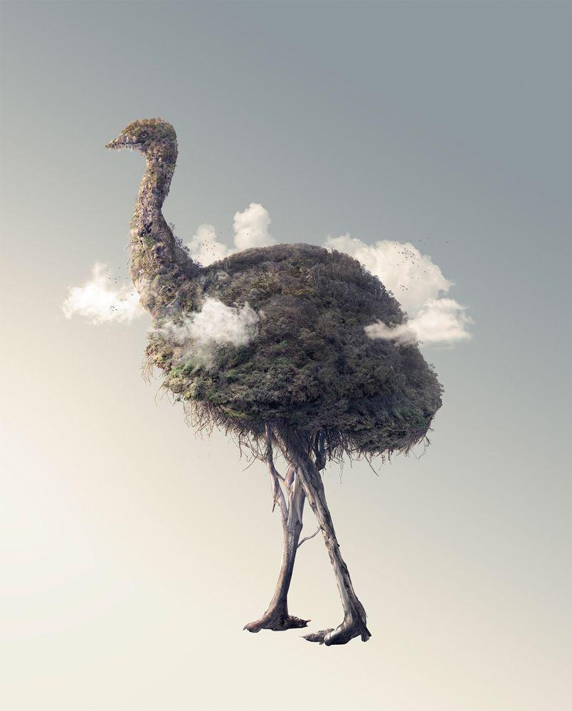 Josh Dykgraaf, poesia visual