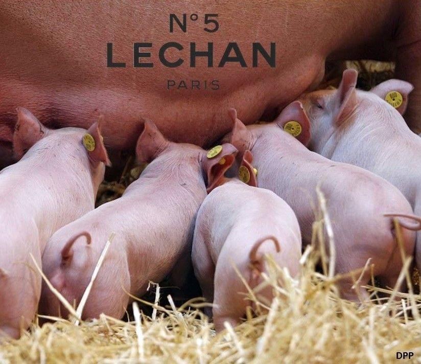 Lechan nº 5
