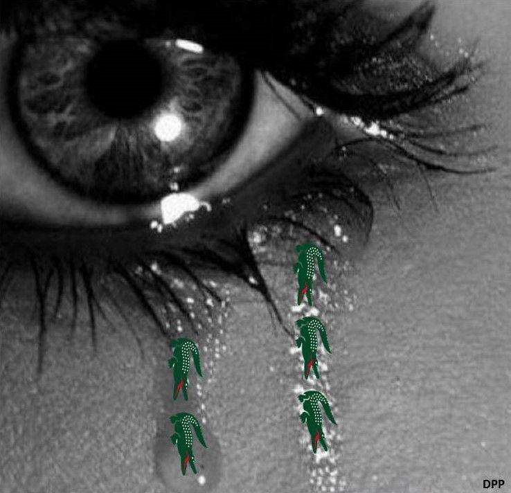 Lágrimas de cocodrilo
