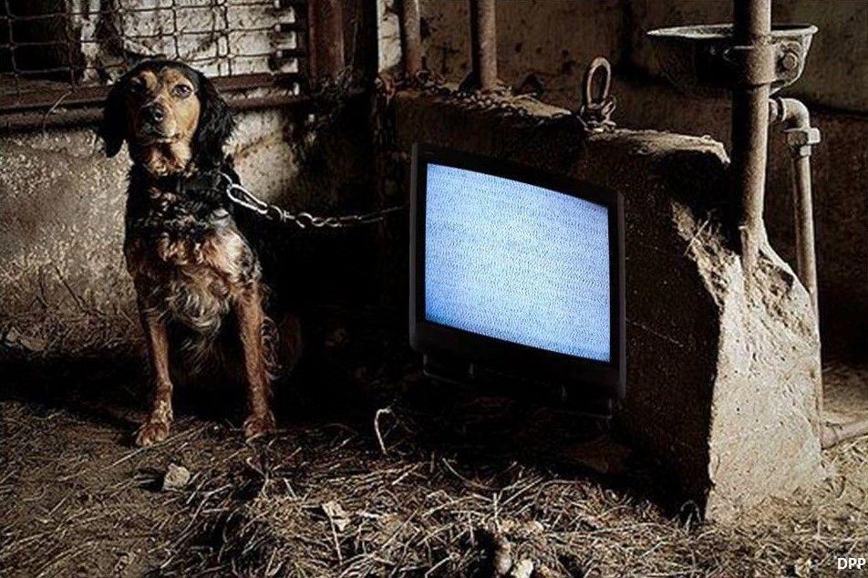 Caseta de perro