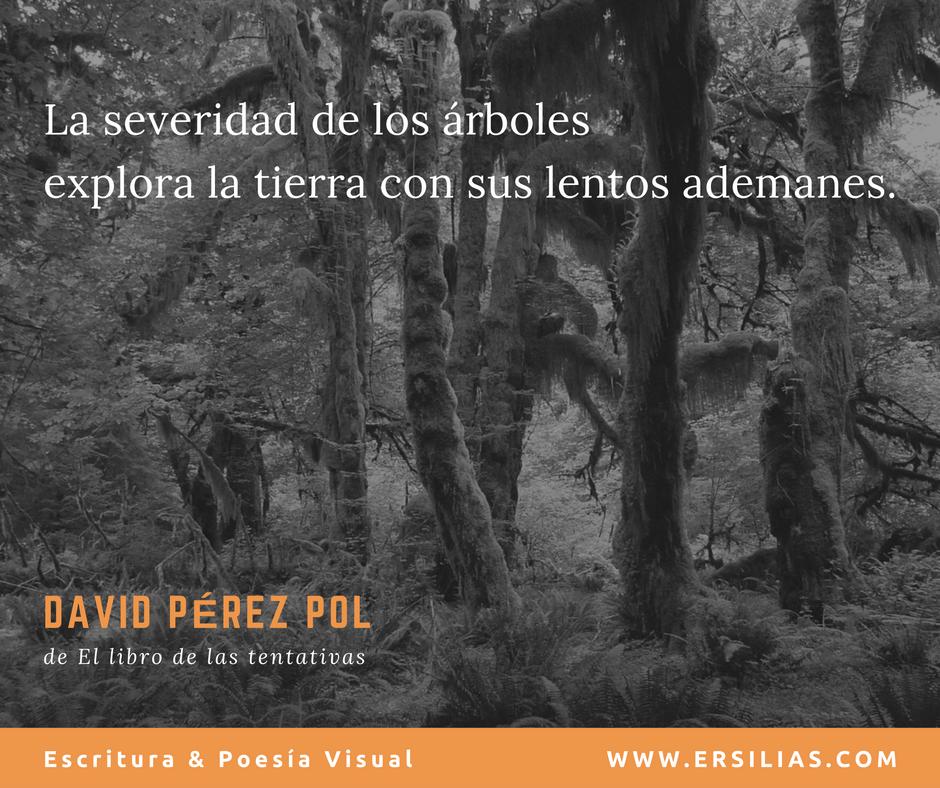 La severidad de los árboles de David Pérez Pol