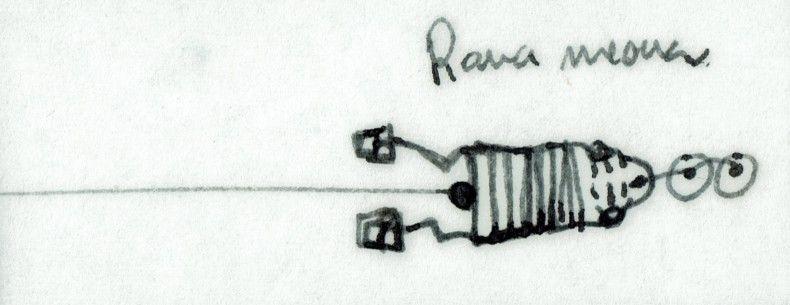 Rana meona