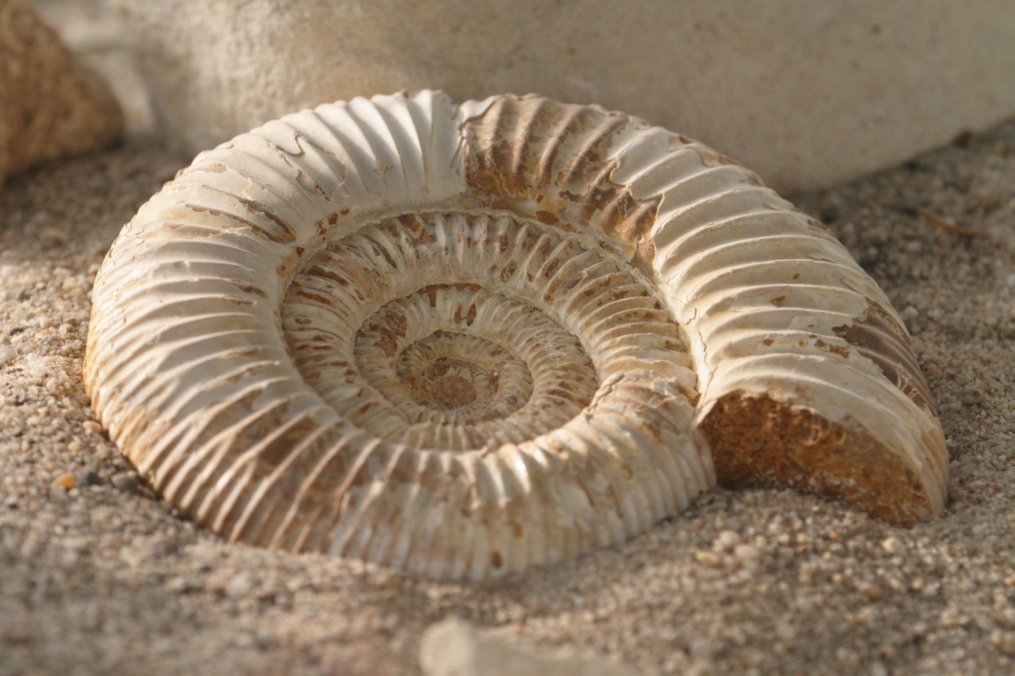 Fósiles, Matrioskas, Bastones, Planchas antiguas