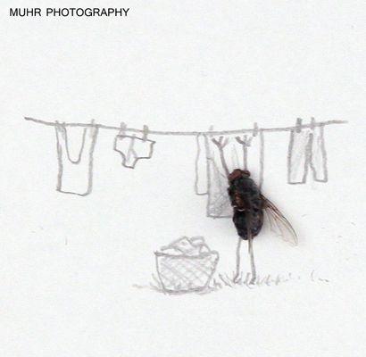 Poesía Visual de Magnus Muhr